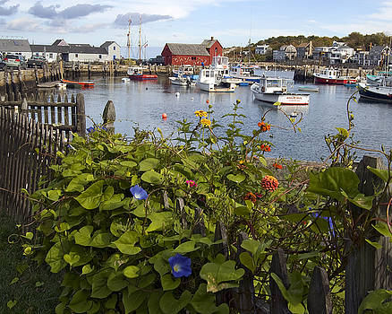 Motif No 1 Flowers by Dave Saltonstall