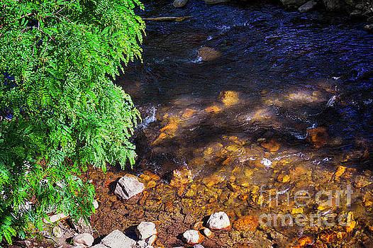 Mountain Stream by JW Hanley