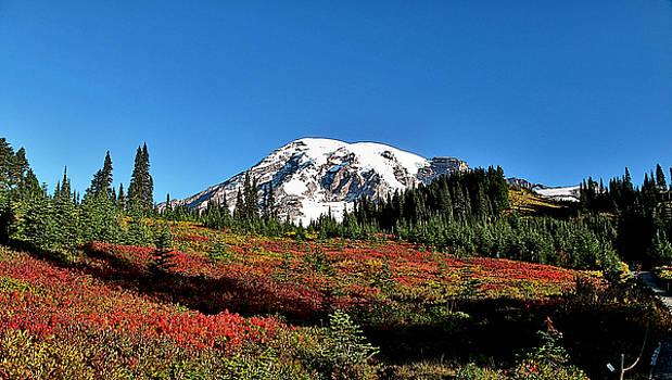 Mt Rainier Fall  by Larry Darnell