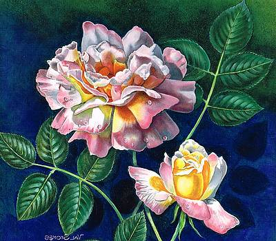 My favourite rose by Val Stokes