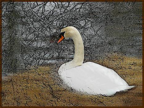 Dee Flouton - Nesting Swan