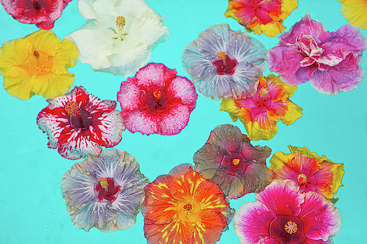 Hibiscus Pool Party by Angelina Hills