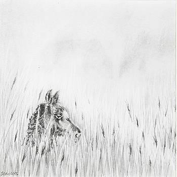 Newborn by Sandy Brooks