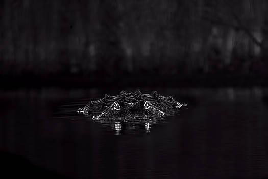 Night Hunter by Mark Andrew Thomas