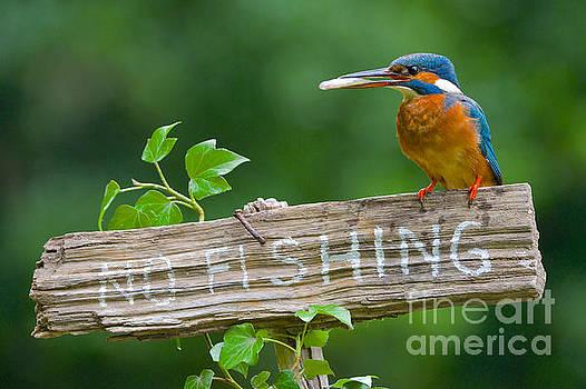 No Fishing by Corne Van Oosterhout