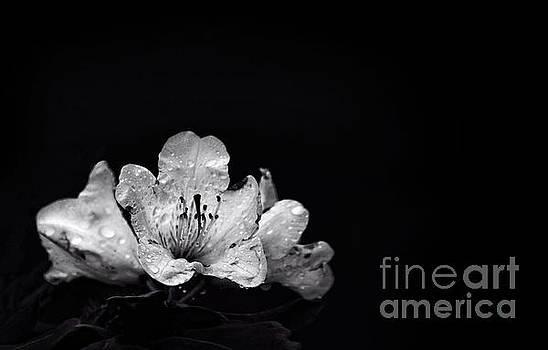 Nocturnal Blossom by Evelina Kremsdorf