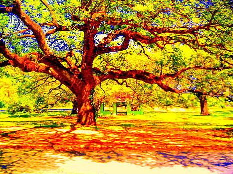 Oak Tree City Park by Ted Hebbler