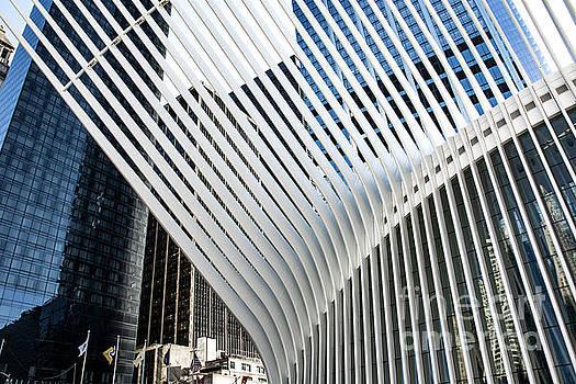 Oculus  by Reynaldo Brigantty