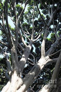 Old Fig Tree by Henrik Lehnerer