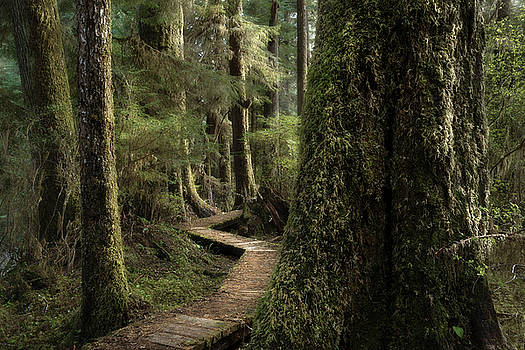 Old Growth Forest by Adam Gibbs
