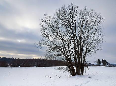 Old tree by the field by Jouko Lehto
