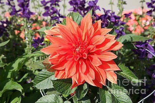 Chuck Kuhn - One Flower