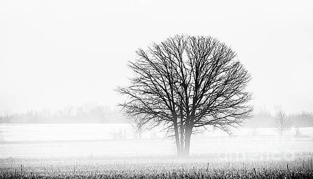 One... by Nina Stavlund