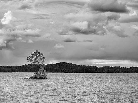 One Pine Island. BW. Koirajarvi by Jouko Lehto