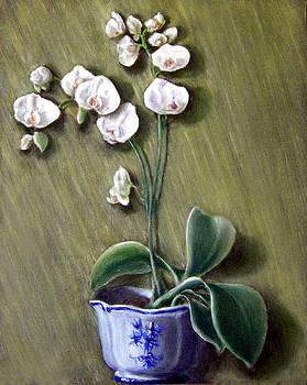 Orchid by Menq Tsai