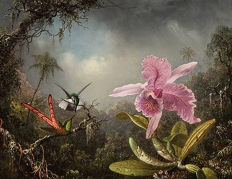 Orchid with Two Hummingbirds by Martin Johnson