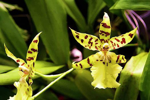 Ricky Barnard - Orchids