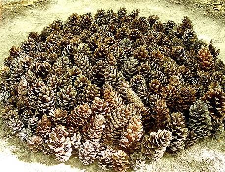 Organize Pinecones by Lizzie  Johnson