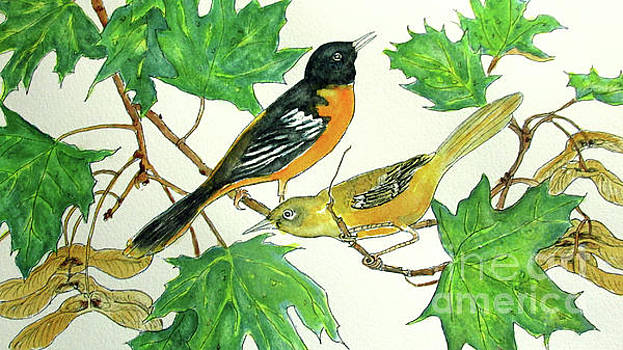 Orioles by Norma Boeckler