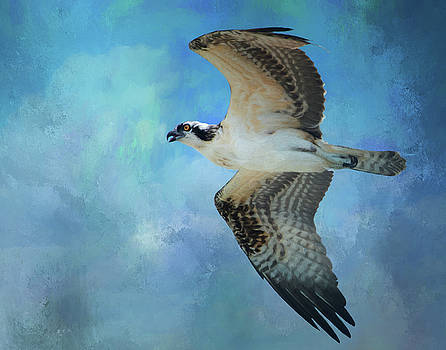 Osprey by Gloria Anderson