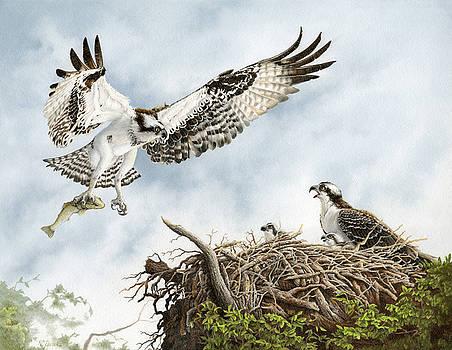Osprey, Lovers Key, Florida by Richard Devine