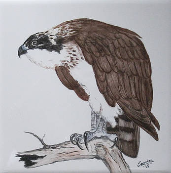 Osprey on Watch by Sandra Maddox