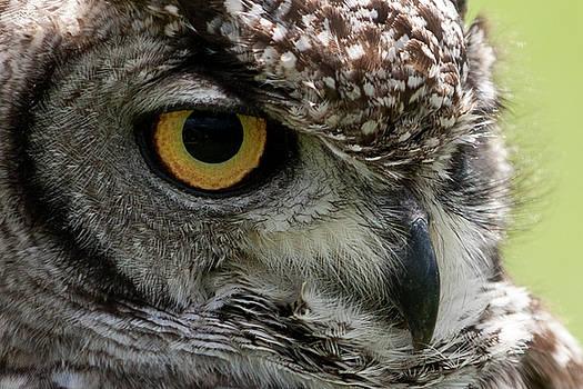 Owl by Jos Verhoeven