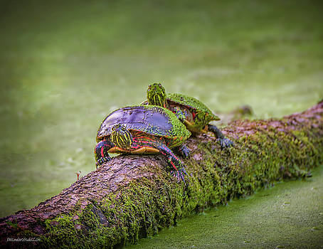 Painted Turtle on a log by LeeAnn McLaneGoetz McLaneGoetzStudioLLCcom