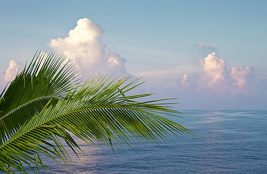 Palm and ocean by Blink Images