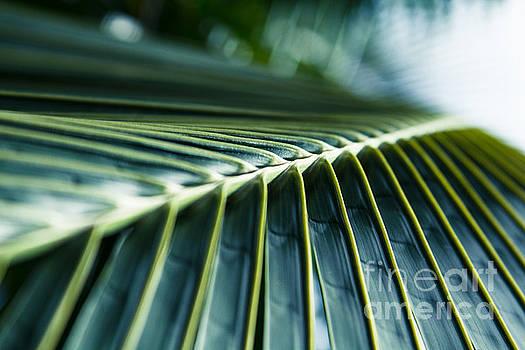 Palm Dreams by Sharon Mau