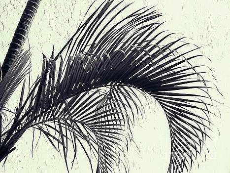 Sharon Williams Eng - Palm Frond Curvature