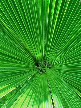 Palm Frond by Kay Gilley