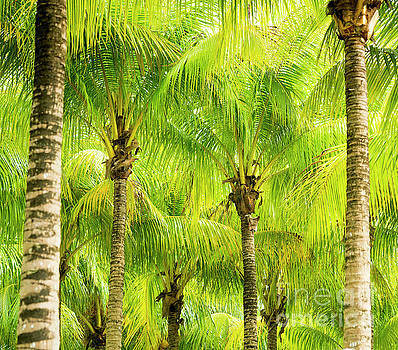 Palm Tree Fronds by Tim Hester
