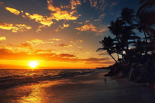 Palm tree on the tropical beach by Valentin Valkov