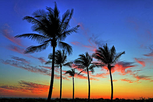 Palm Tree Skies by Scott Mahon