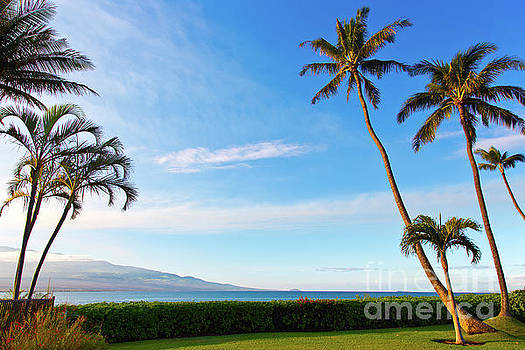 Palm Trees in Sunlight on Maui Hawaii by ELITE IMAGE photography By Chad McDermott