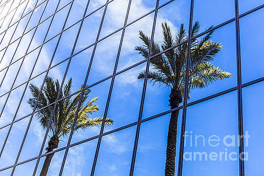 Paul Velgos - Palm Trees Reflection on Glass Office Building