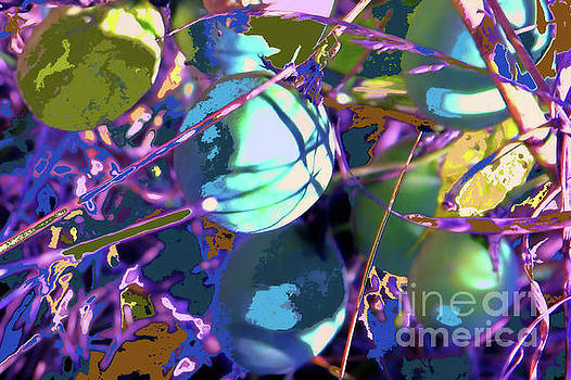 Passion Flower Pods by Shirley Moravec