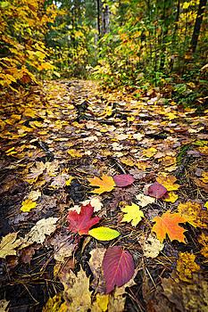 Elena Elisseeva - Path in fall forest