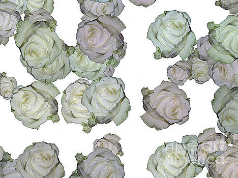 Patterns From Roses by Elvira Ladocki