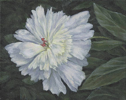 Peony by Stephen Howell