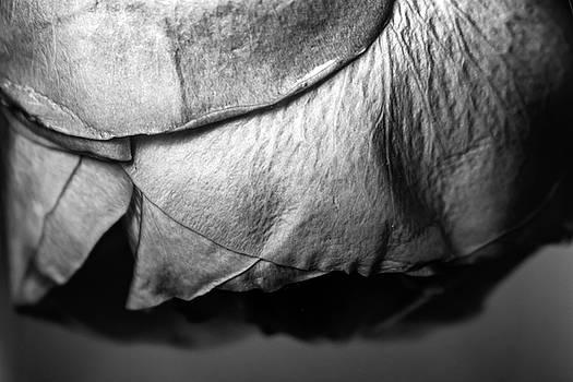 Petals by Stephanie Johnson