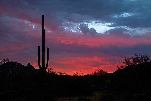 Phoenix Metro Morning 5 by Michael Smith-Sardior