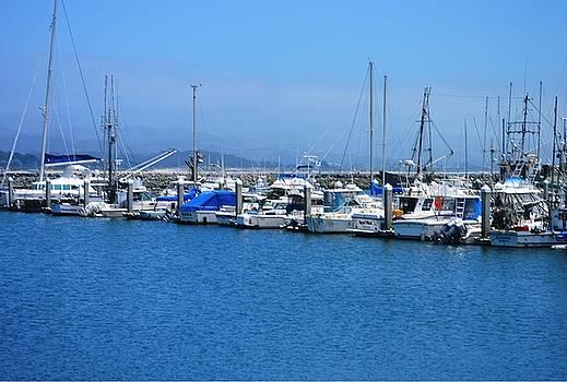 Pillar Point Harbor by Marian Jenkins