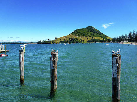 Pilot Bay Beach 3 - Mt Maunganui Tauranga New Zealand by Selena Boron