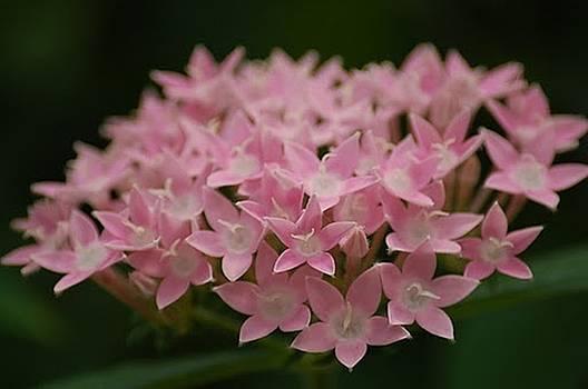DONNA BENTLEY - Pink