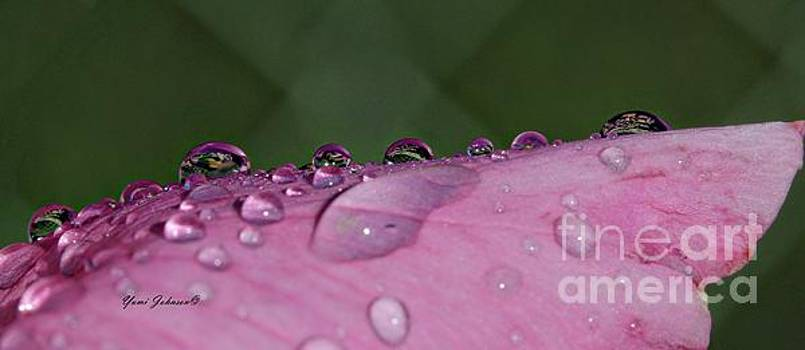 Pink Droplets by Yumi Johnson