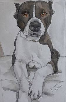 Pit Bull by Janet Butler