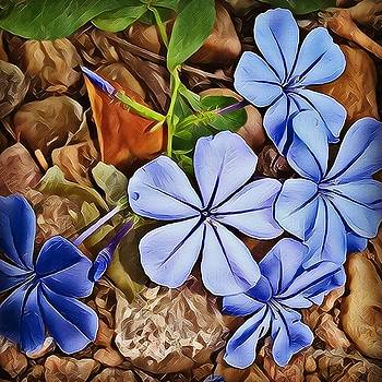 Plumbago2 by Amber Stubbs