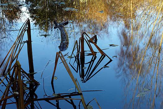 Pond by David Harding